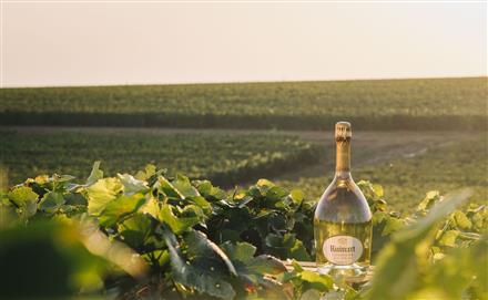 Champagne Ruinart (1)