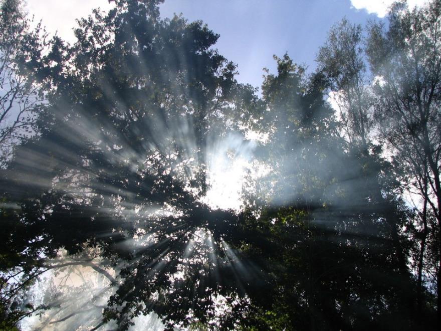 Forêt d'Argonne - Argonne