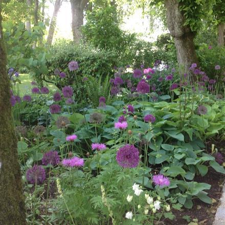 Jardin de la Buissonnière (3)