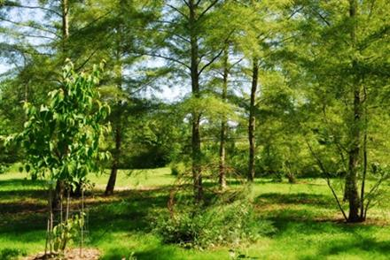 Jardin du Clos - Saint Saturnin