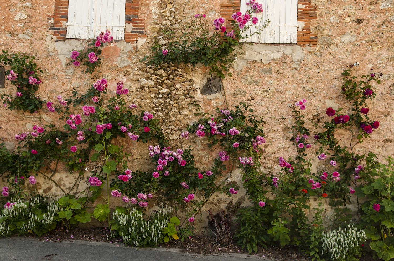 Rendez-vous aux Jardins : Orbais l'Abbaye