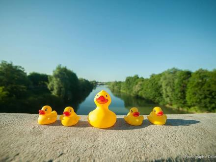 duck-race-chalons (4)