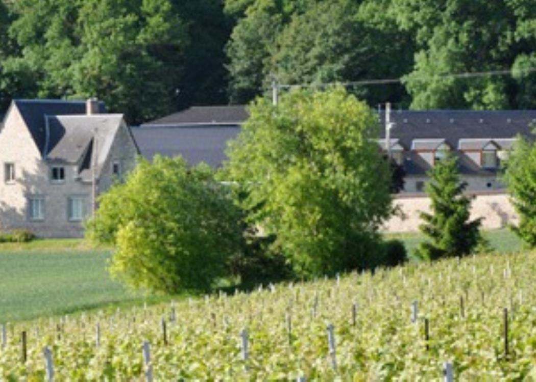 Champagne Mont d'Hor - Saint-Thierry (3)