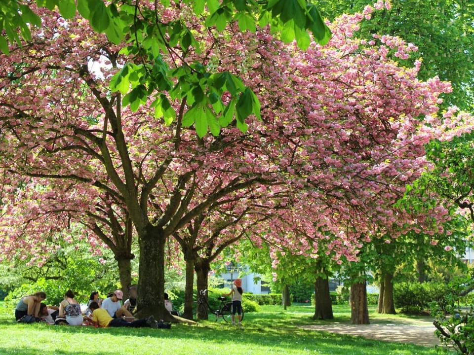 Parc-Saint-Remi--Reims--c--Pauline-Colin